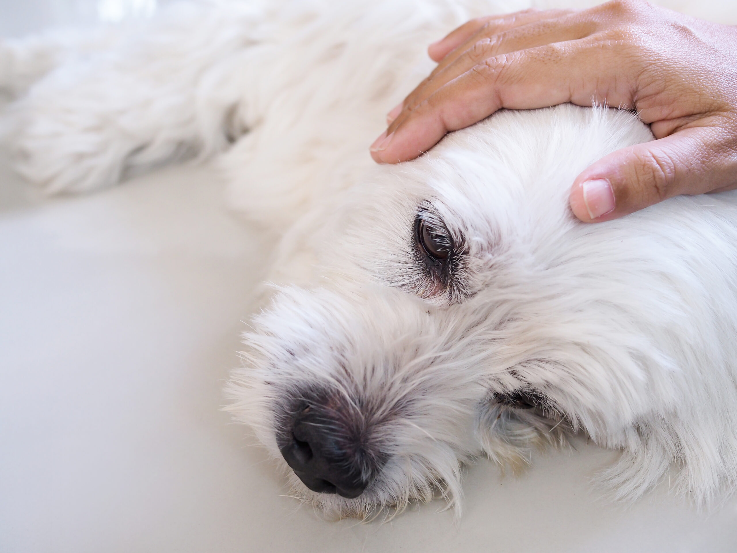 RIP – Pet Euthanasia My Veterinary Oath Ending Needless Animal Suffering