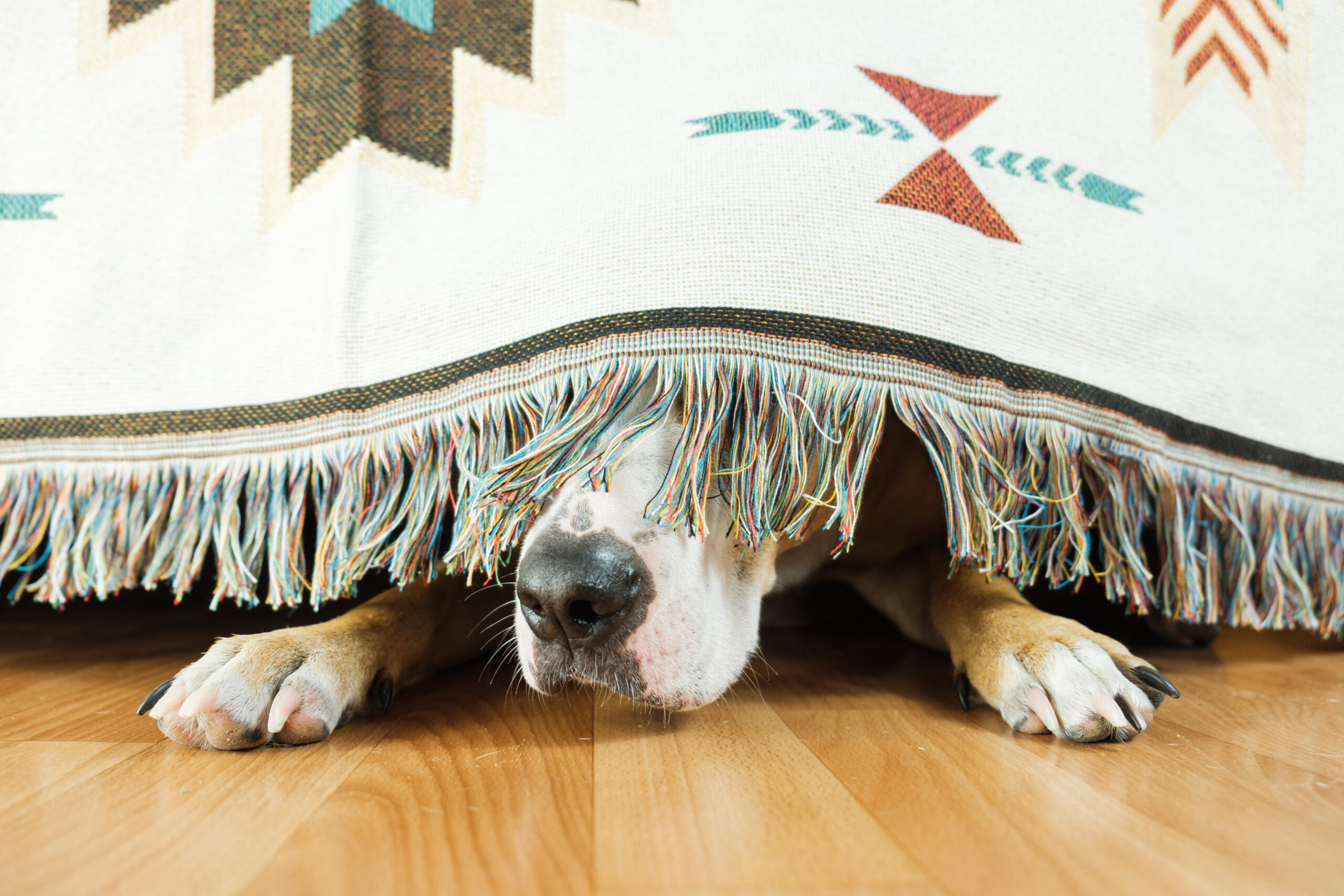 Clues Your Senior Pet May Be Suffering Signs of Dog Dementia – Start Early Treatment for Best Results!