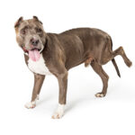 What You Need To Know About Canine Knees – An Option Other Than Surgery