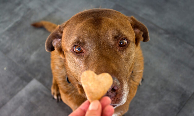 My Two Biggest Pet Peeves – Dog Treats and Training