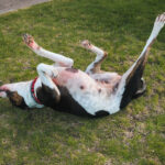 Itchy Skin – The Dog I Would Never Forget