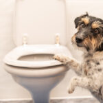 Get the scoop on dog poop – solving the diarrhea mystery